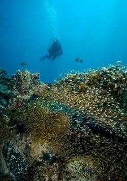 Bawe island coral wall
