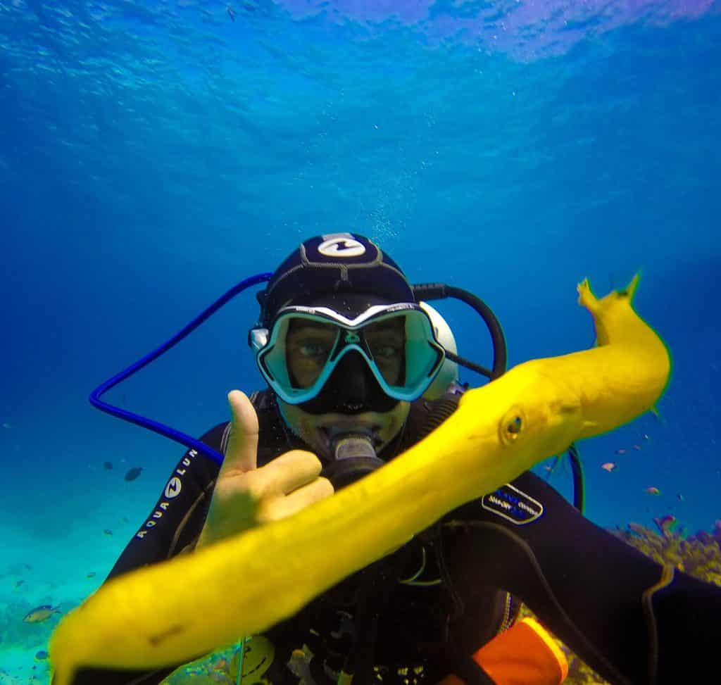 Diver with a Trumpetfish
