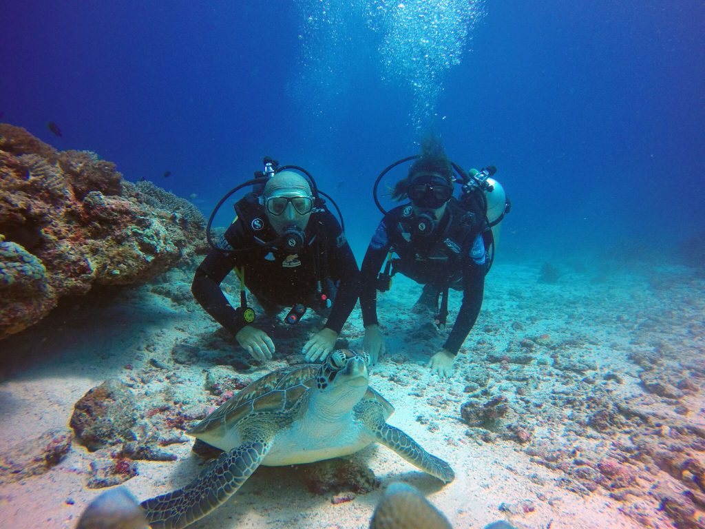 Diver behind a turtle