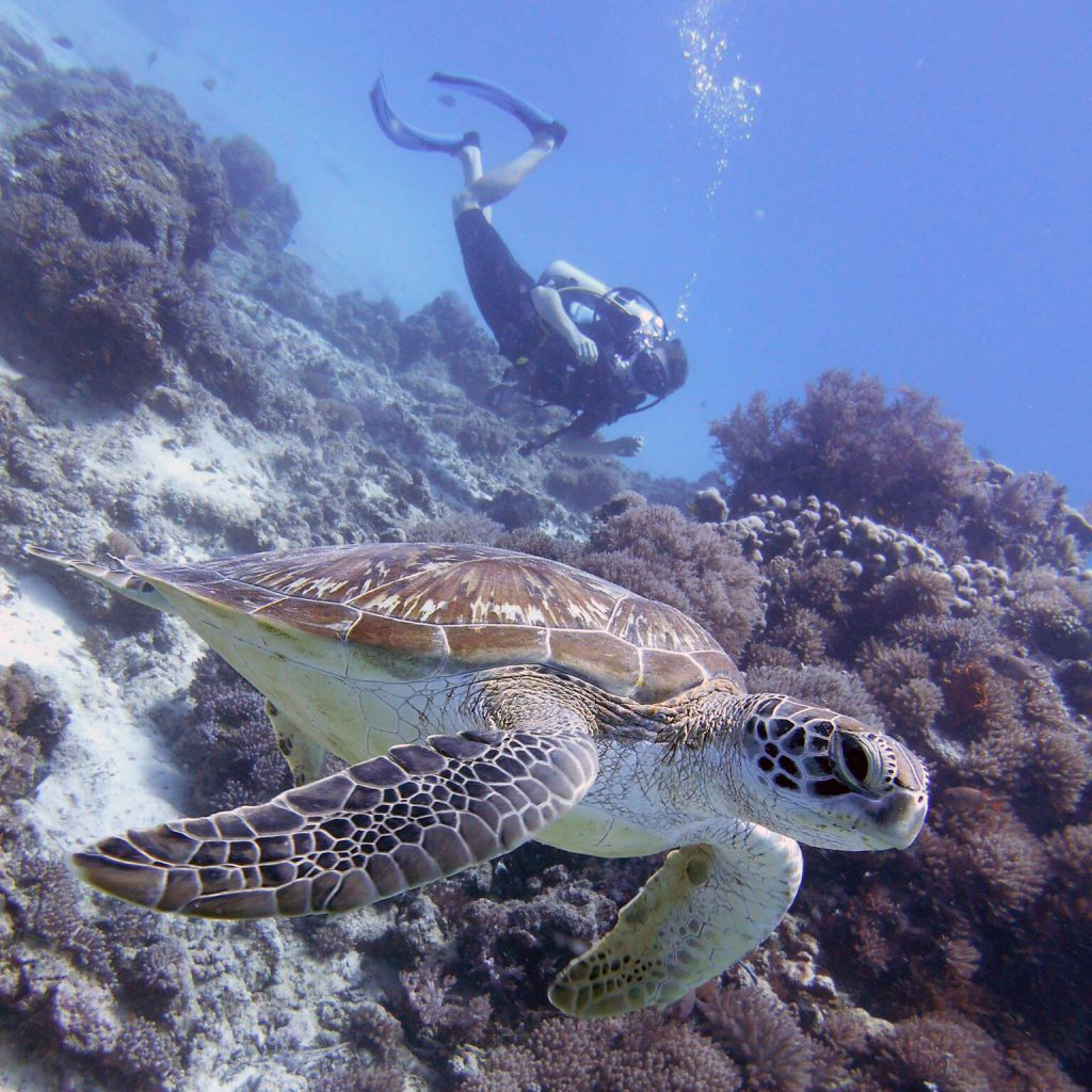 Diver with a turtle