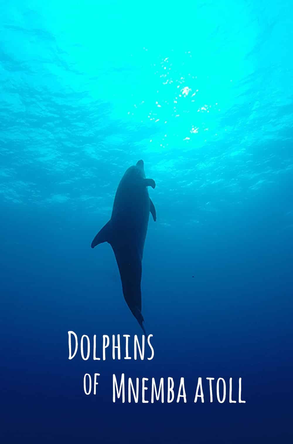 Dolphin at Mnemba