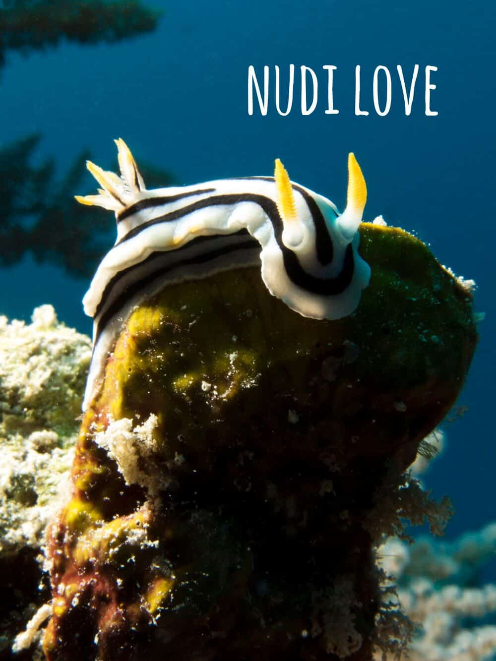 Nudibranch at mnemba