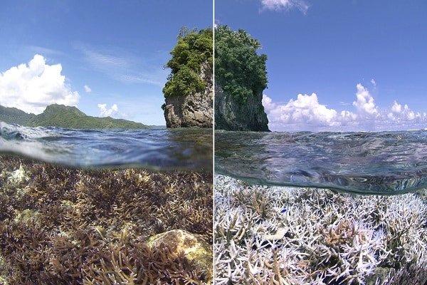 Coral bleaching comparison